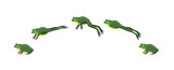 Frog Jumping Animation Sequence Cartoon Vector Illustration