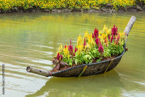 Leinwanddruck Bild Celosia argentea L. cv. Plumosa flower in The boat is made from bamboo on water