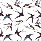 Watercolor swallow pattern - 249015293