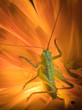 A close up of the grasshopper on flower.