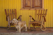 a dog and wooden rocking chairs on veranda