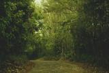 Fototapeta Bambus - Bamboo Road in Guaramiranga - Ceará - Brasil © Danilo