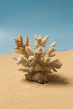 White coral shell on the sandy beach - 249093274