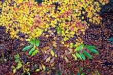 """Постер, картина, фотообои """"紅葉、落ち葉、秋風景、季節感 、秋、もみじ、カラフル"""""""