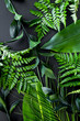 Fresh tropical green leaves on dark background
