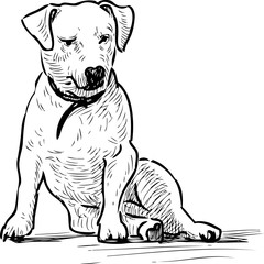 Sketch of a sitting lap dog