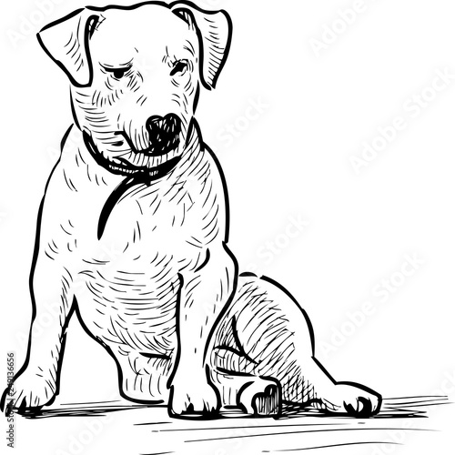 Sketch of a sitting lap dog © asmakar