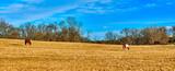 Two Horse Grazing in Field - 249140691