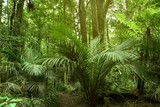 Large tree in jungle - 249174027