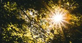 The bright rays of the sun shine through the golden leaves. Slow motion. - 249204241
