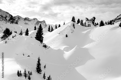 beautiful Alps mountain lanscape fir trees and rocks under snow © chechotkin
