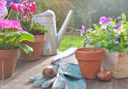 Leinwanddruck Bild spring flowers potted and gardening  accessories