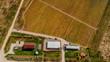 Farm with vineyard