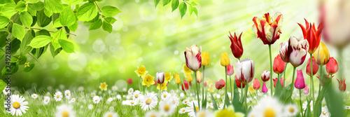 Blumen 1030 - 249281226