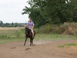 A man riding a horse on the field. - 249294657