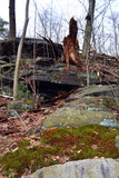 Dead Tree on Hillside in Winter - 249319444