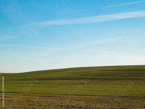 fototapeta na ścianę Green field on a background of blue sky