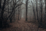 Mystic and dark forest covered with fog. Mysterious and magical.