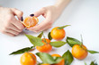 Women's hands cleaning tangerine. Orange fresh tangerines with green leaves lie on a white background.