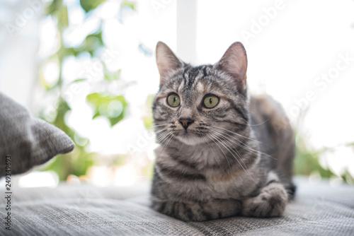 Liegende Katze - 249349693