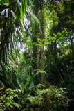 Jungle landscape in the Monkey Forest, Ubud, Bali, Indonesia
