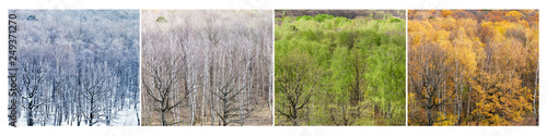 view of bare birch and oak trees in spring - 249371270