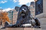 Trafalgar square lion at Nelson column, London, UK - 249371858