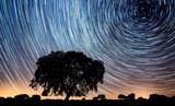 Fototapeta Kosmos - Vórtice de estrelas e azinheira © Luis