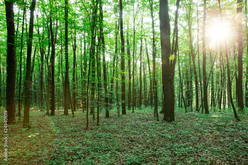 green Forest trees. nature green wood sunlight backgrounds © Pakhnyushchyy