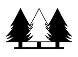 pine trees forest - 249402483