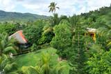 Peaceful jungle habitat and existance - 249440486