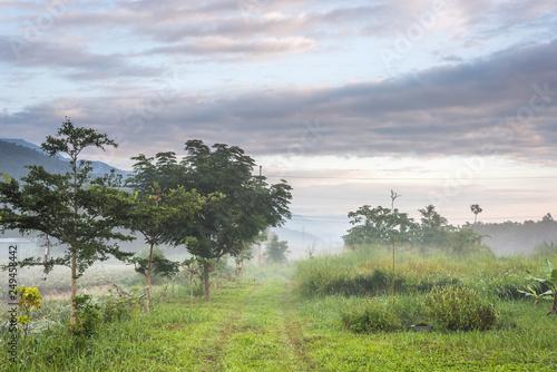 mist countryside landscape © ChenPG