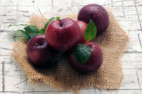 Foto Murales Prunus domestica ft7106_1696 Prugne Plum Susine Pflaume Pflaumen Prunes