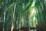 Fototapeta Bambus - Bamboo forest © ferncompany