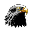 Bald Eagle, Head of Eagle Vector Illustration, Isolated Vector