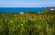 Leinwanddruck Bild - flower field - Tintagel - Cornwall