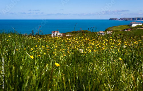 Leinwanddruck Bild flower field - Tintagel - Cornwall