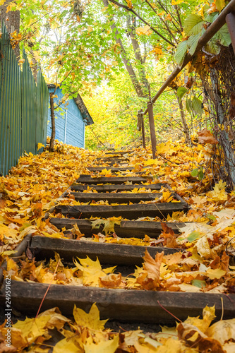 Wooden stairs covered with autumn leaves © Sergey Oleynik