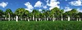 panorama of flower meadow, flower meadow against the background of orange grove, orange trees in the flowery meadow - 249692638