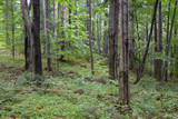 Natural mixed stand of Bieszczady Mountain region