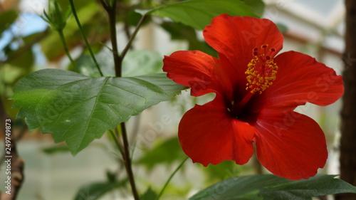 red flower in garden - 249749873