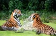 What animals are kept in the zoo and not only. Wildlife zoos wild forest.