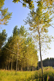Pine Tree View - 249808017
