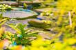 Leinwanddruck Bild - Marsh plants in the tropics