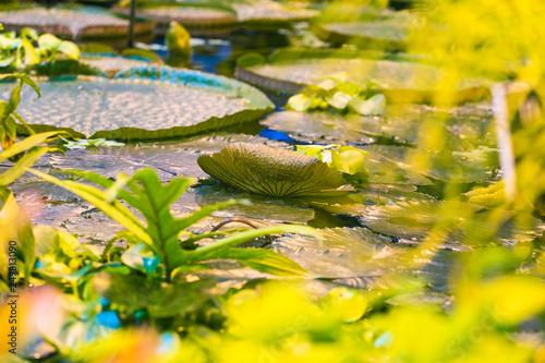 Leinwanddruck Bild Marsh plants in the tropics