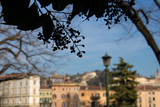 The blurred city view with the tree branch in front - Verona, Italy - 249824643