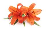 Bouquet of orange lilies.