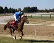 Jockey and horse galloping at the hippodrome