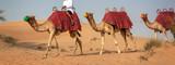 Camels safari in the sand dunes during tourists desert rides in Dubai, United Arab Emirates - 249877604