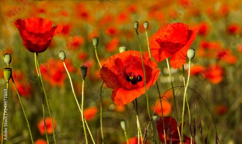 Sommerblumen - 249877869